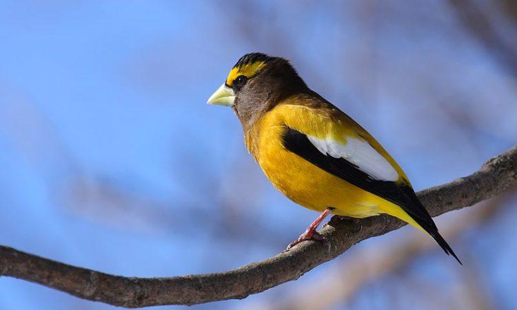 Bird (Credit U.S. Fish and Wildlife Service)
